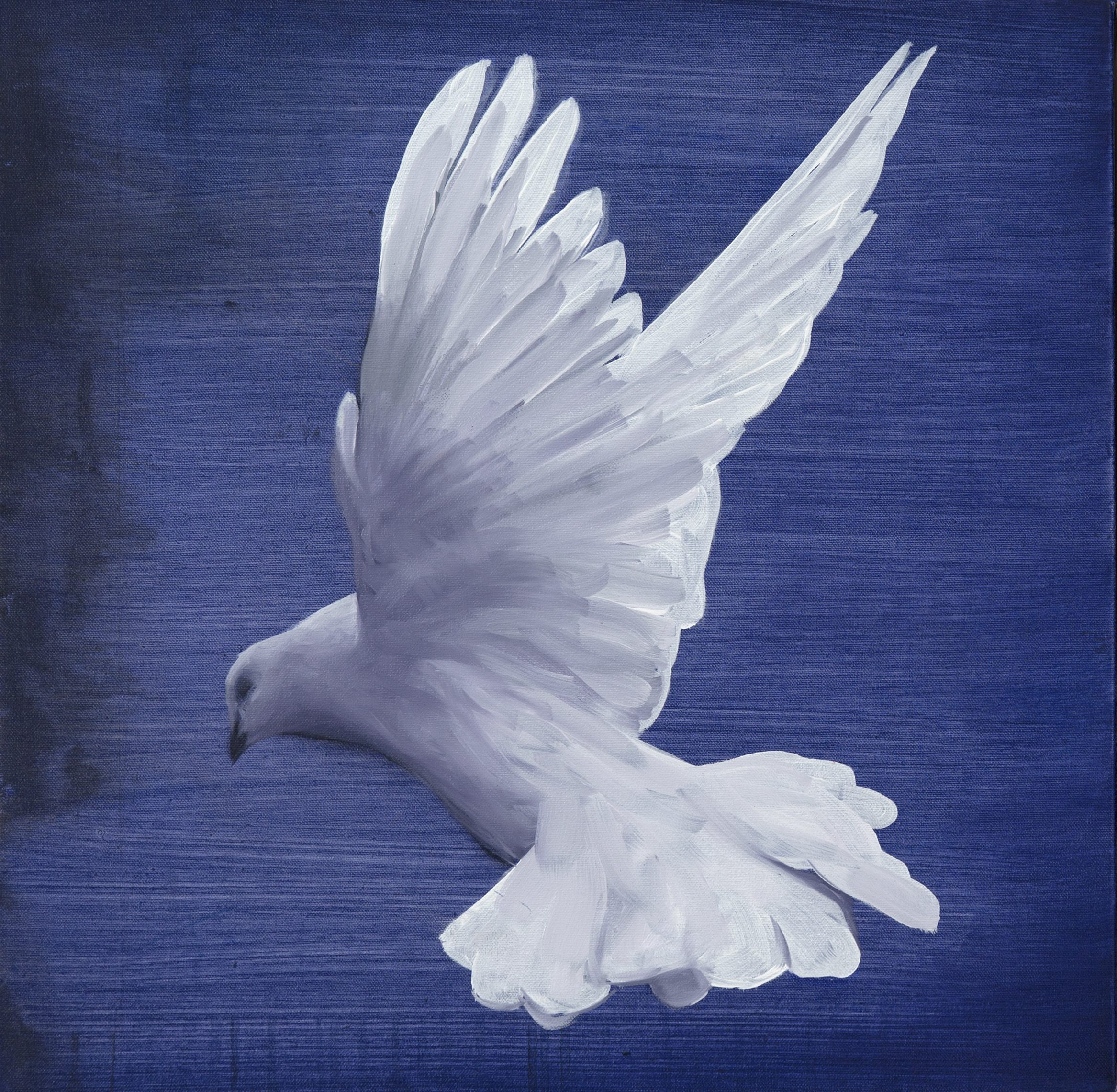 Dove II by Angus McDonald