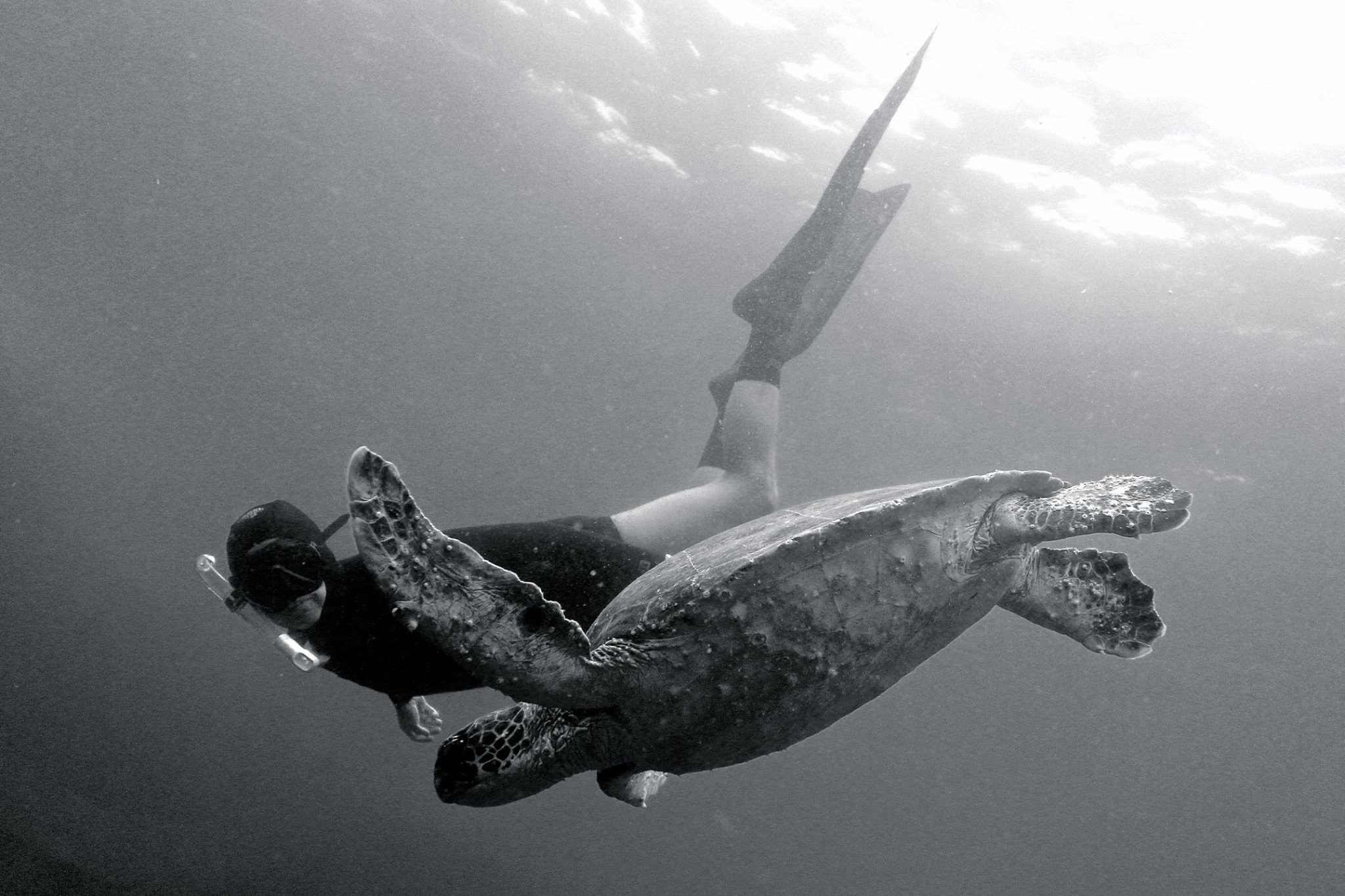 Hanging-with-a-turtle-at-Julian-Rocks-Marine-Sanctuary-photo-by-Nicole-Mclachlan
