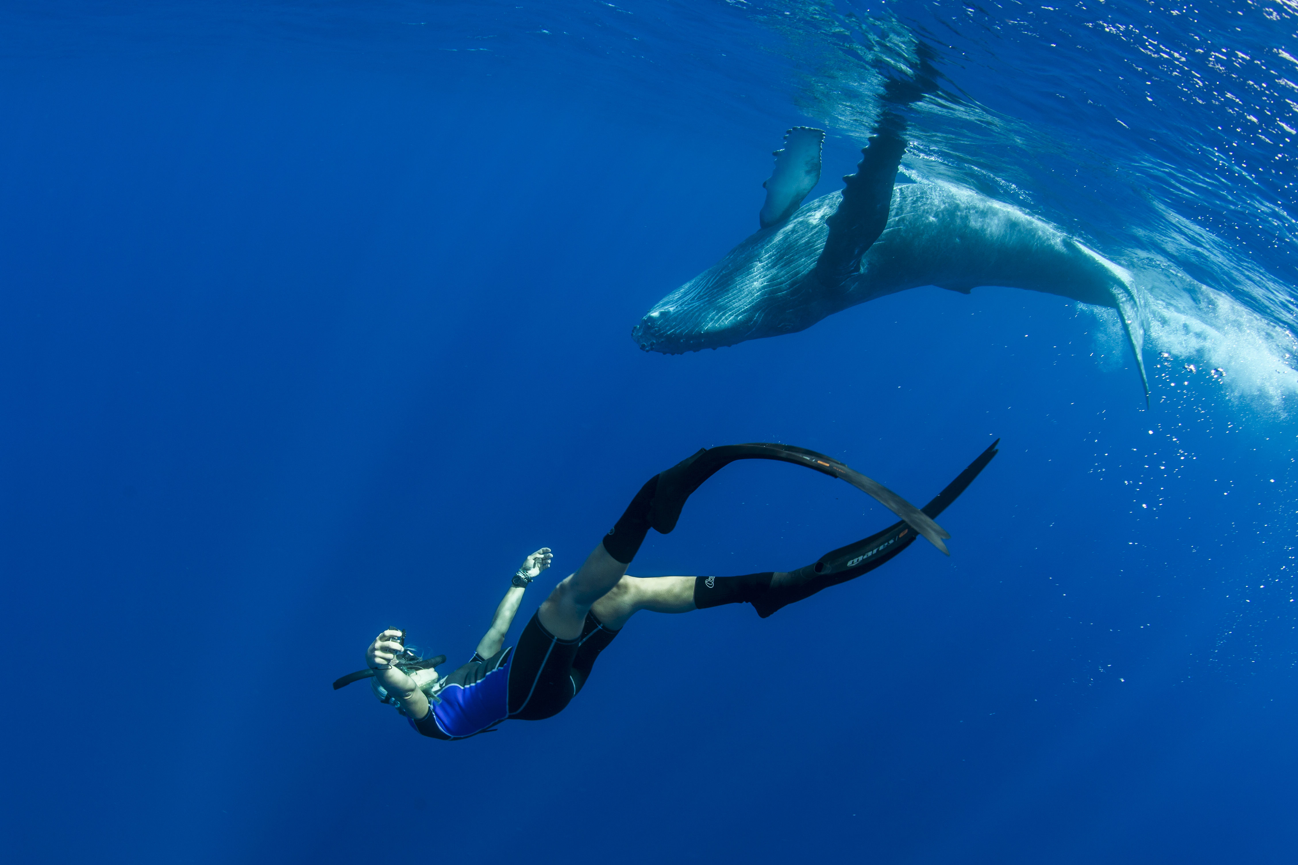 One-of-those-moments-where-the-world-stops-and-everything-ceases-to-exist.-This-baby-humpback-is-one-of-many-reasons-I-love-the-ocean-photo-by-Scott-Portelli-e1467151462750