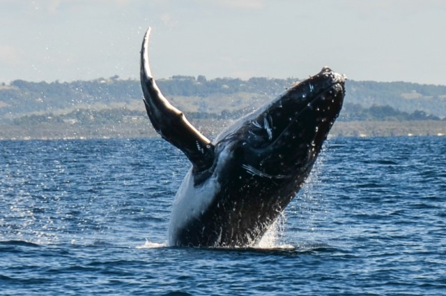 Feature common ground north coast - Dive byron bay ...